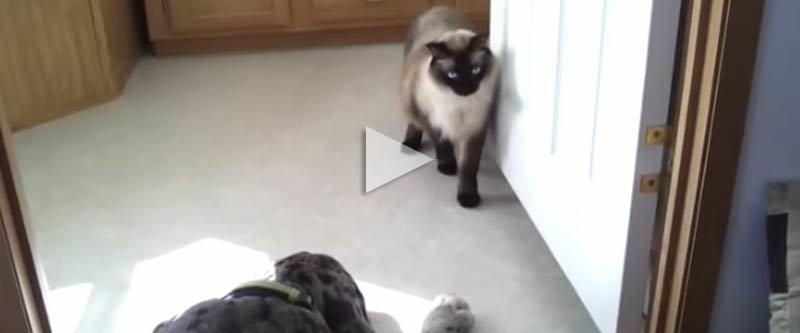 Cat Sneaking Sm Video